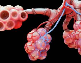 breathing Realistic Human Bronchi Alveoli Anatomy 3D