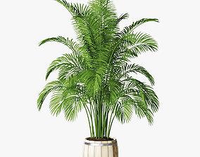 palm 11 3D model