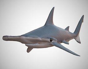 3D model Hammerhead Shark
