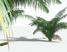 EVERYPlant Seashore Palm 11 --14 Models-- 3D