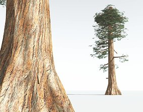 3D asset EVERYPlant Giant Redwood LowPoly 02 --11 Models--