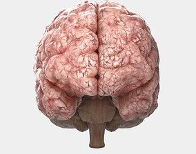brain 3D model