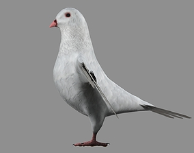 3D White Pigeon