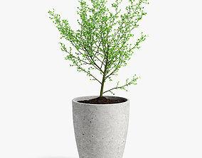 tree in pot 3D