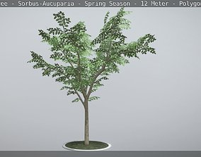 3D asset Rowan Tree - Sorbus-Aucuparia - 12m -