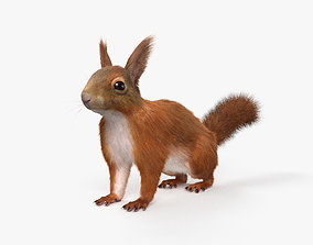 American Red Squirrel HD 3D