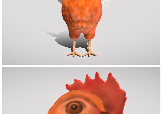 Sculpted Chicken