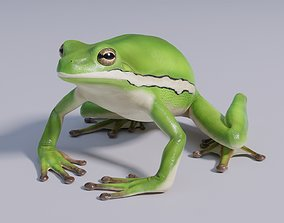 3D model American Green Tree Frog - Animated