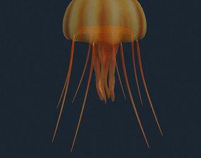 animated 3DRT - Sealife - Jelly FIsh
