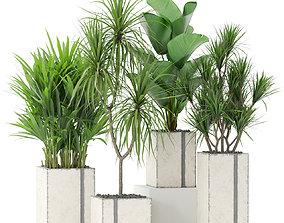 Plants collection 375 3D model