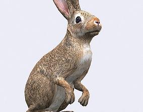 bunny animated 3DRT - Hare