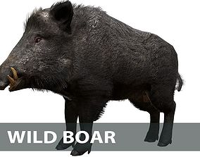 3D asset animated Wild boar male