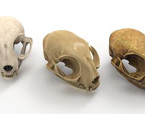 3D Cat skull