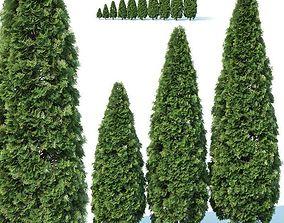 Thuya occidentalis Nr2 - Smaragd 10 3D model