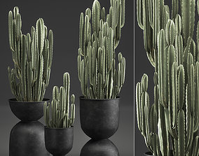 Cactus in a flowerpot for the interior 898 3D