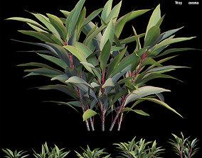 Cordyline Fruticosa 3D