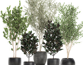 Trees in a black pot for the interior 701 3D