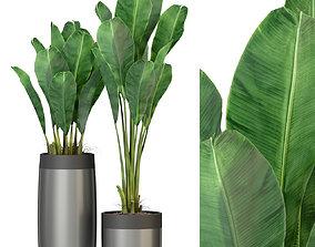 Plants collection 308 3D