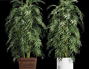 3D bamboo plants 90