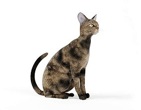 Mottled Brown Cat Sitting 3D