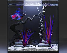 3D Aquarium with Siamese fighting fish