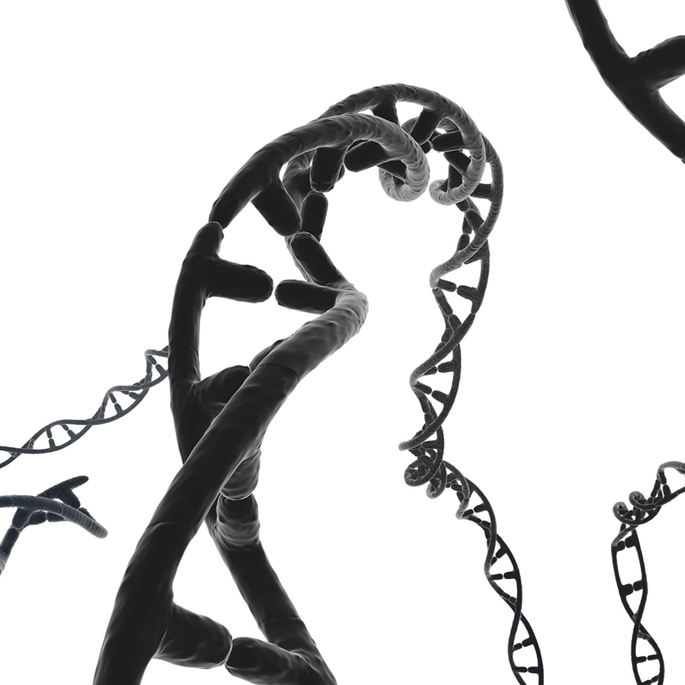 Dna set of 3D models with shape keys - textures - material - 28 bio alpha brushes - 29 photoshop brushes