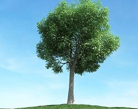 Large Oak Tree 3D model