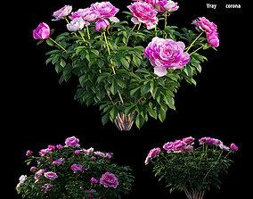 3D Peony plant set 03