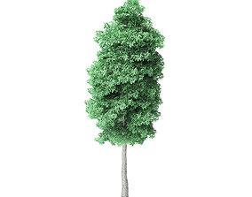 American Basswood Tree 3D Model 10m