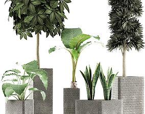 3D Plants Collection 39