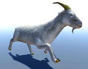 Goat 3D Model animated