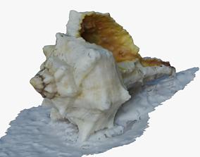 Shell scan 3D