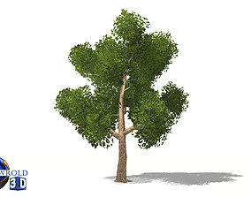 realtime Realistic elm tree lowpoly 3d model