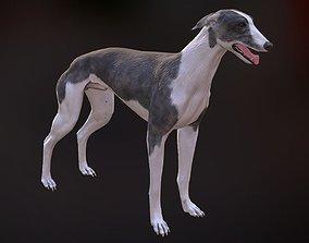 3D asset Greyhound