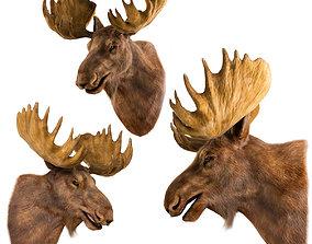 Elk Head 3D