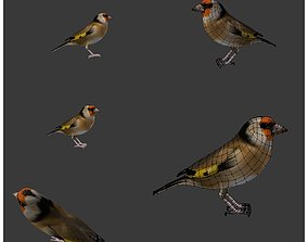 3D bird golden finch 2