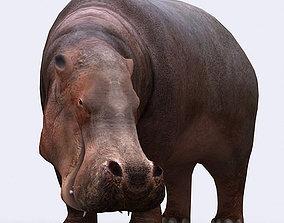 3DRT - Hippopotamus animated