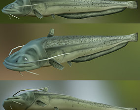 CatFish 3D asset