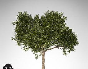 XfrogPlants Avocado tree 3D model