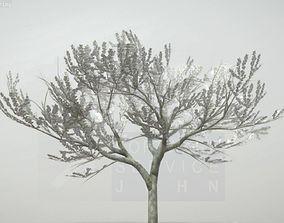 3D model Plum Trees 8m Spring