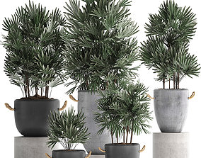 3D model Collection of exotic palm trees in concrete pots