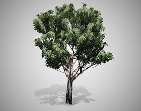 3D model Red Gum Tree