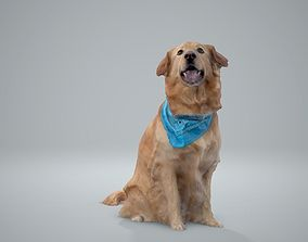 3D model Sitting Dog Labrador Dog0002-HD2-P01-S