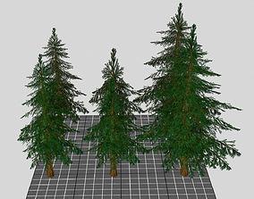 3D model jungle Spruce Trees