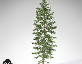 3D model XfrogPlants Nikko Fir