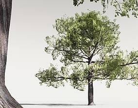 EVERYPlant English Oak LowPoly 15 -- 10 Models 3D asset
