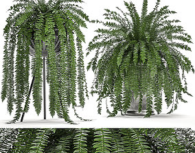 3D model Decorative Fern in a white flowerpot 517