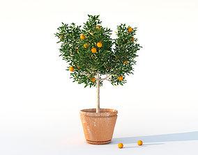 Plants - orange tree in vason tropical 3D