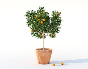 Plants - orange tree in vason 3D