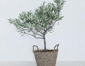 Olive tree in a basket 3D model